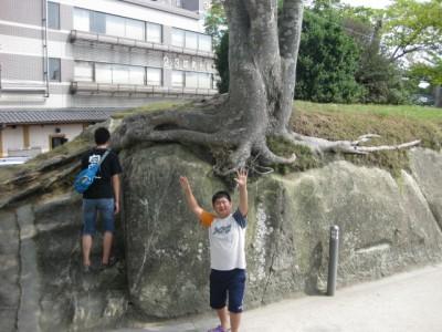 岩にへばりついたケアキ