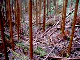 強度間伐の森