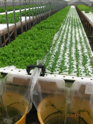 水耕栽培農場