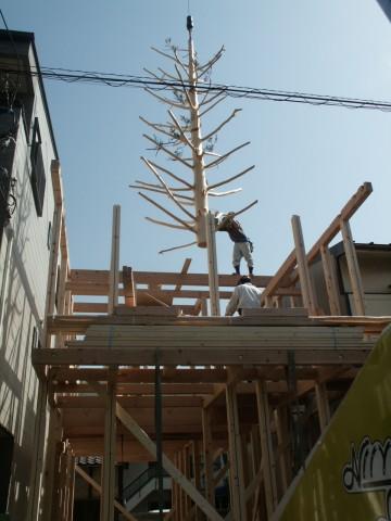 家の中に生える木