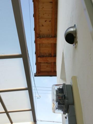 鳥害対策,垂木掛けにスズメがとまる,杉板現しの軒天